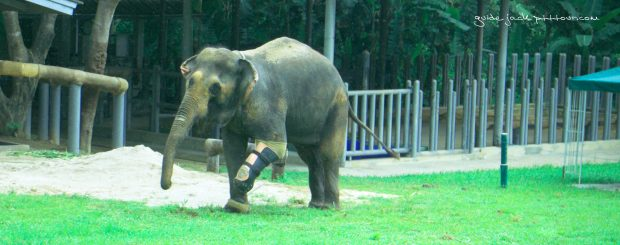 elephant-hospital-lamphun-and-lampang