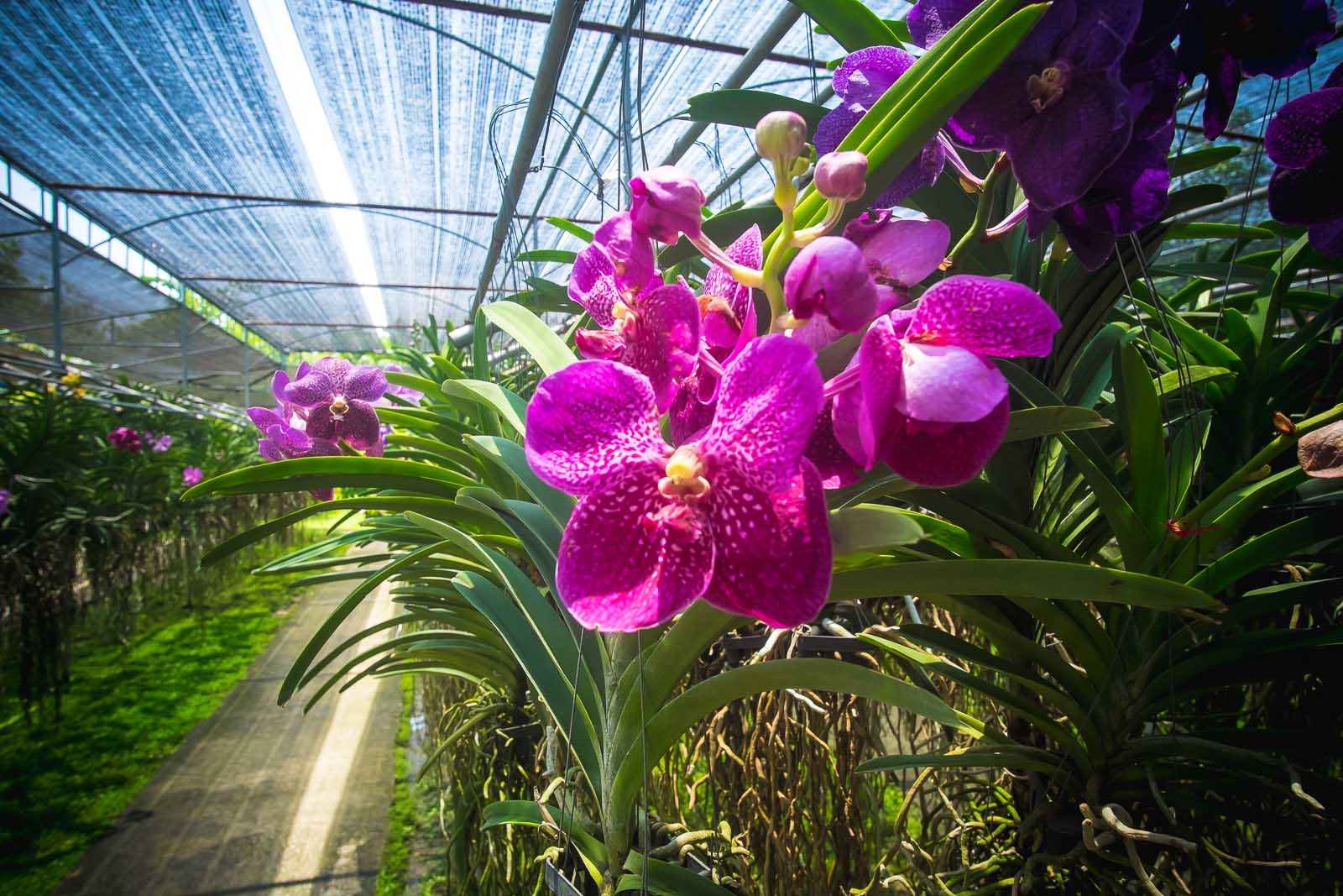 Bai Orchid and Butterfly Farm