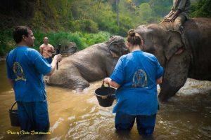 elephant elephant care in Chiang Mai