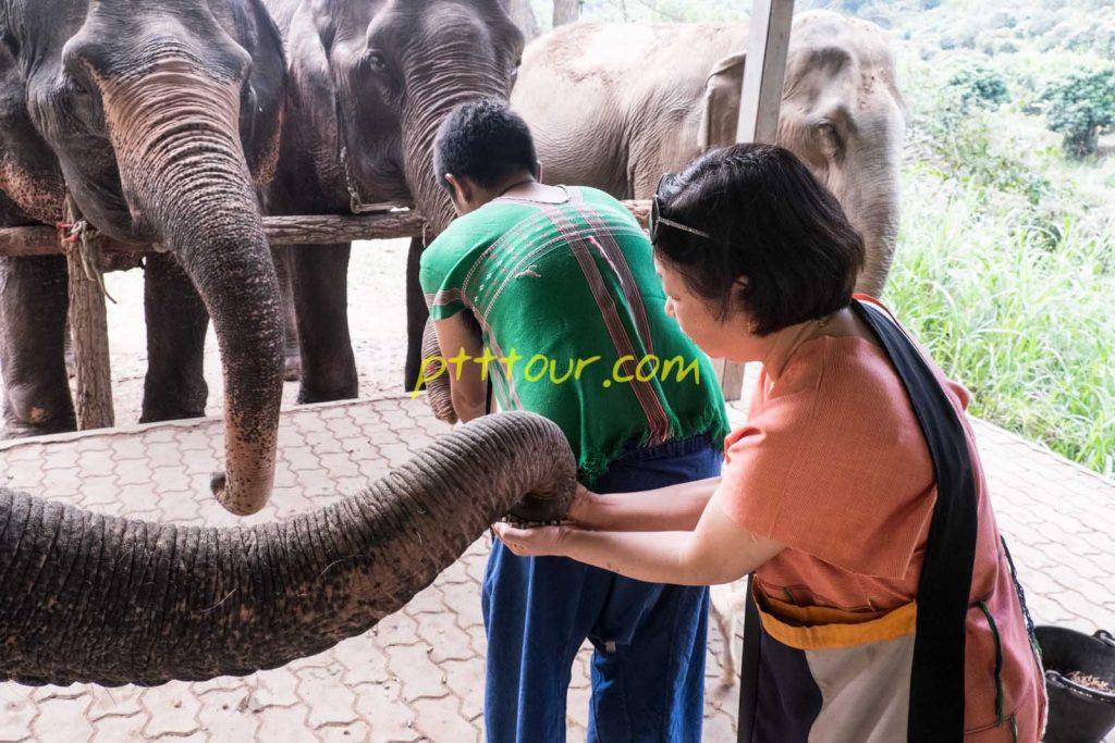 Elephant Mahout Experience Chiang Mai.